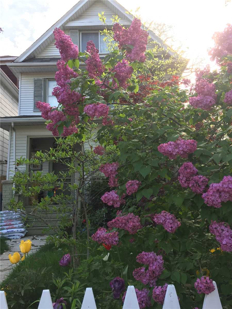 1 Hambly Ave, Toronto E4373373