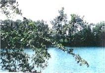 25 Bells Lake Rd, King N4333146