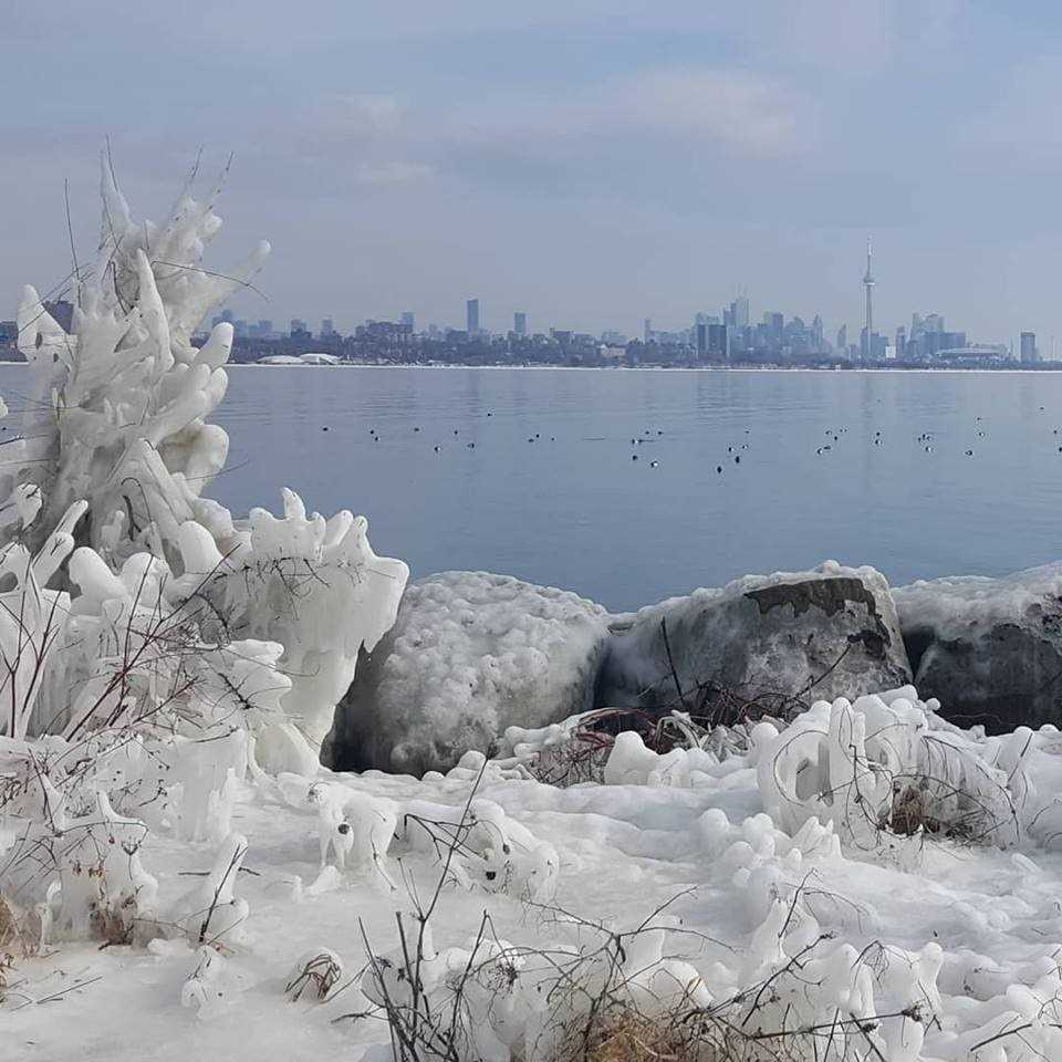 #907 - 2067 Lake Shore Blvd W, Toronto W4352248