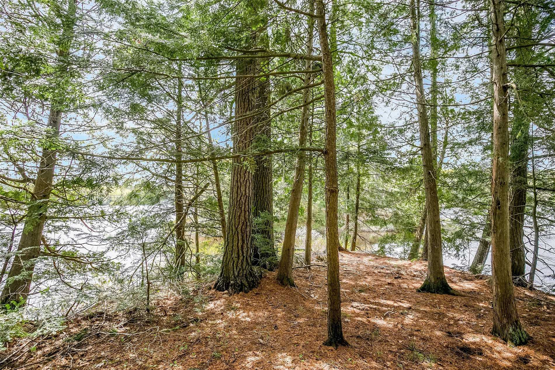 92 Lake Ridge Rd, Seguin X4338938